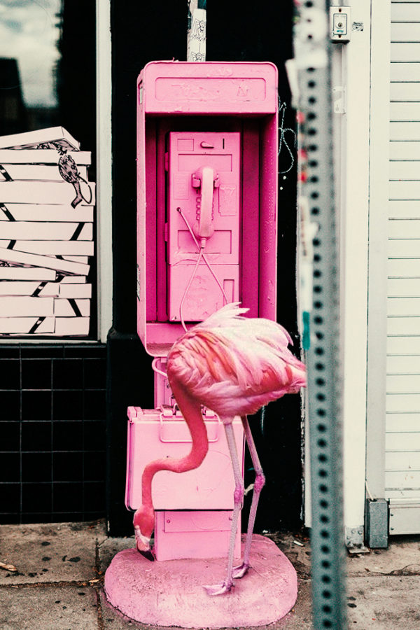 pink $ock - do you believe in destiny?